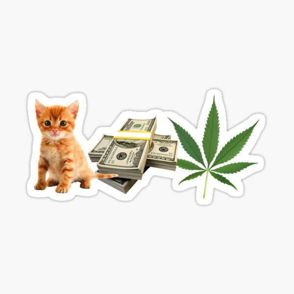 Pussy money weed porn